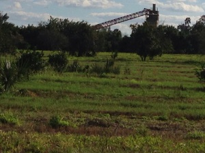 Cement plant amid abandoned orange groves